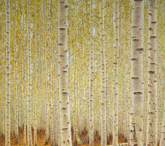 Vor lauter Bäumen... 100x120